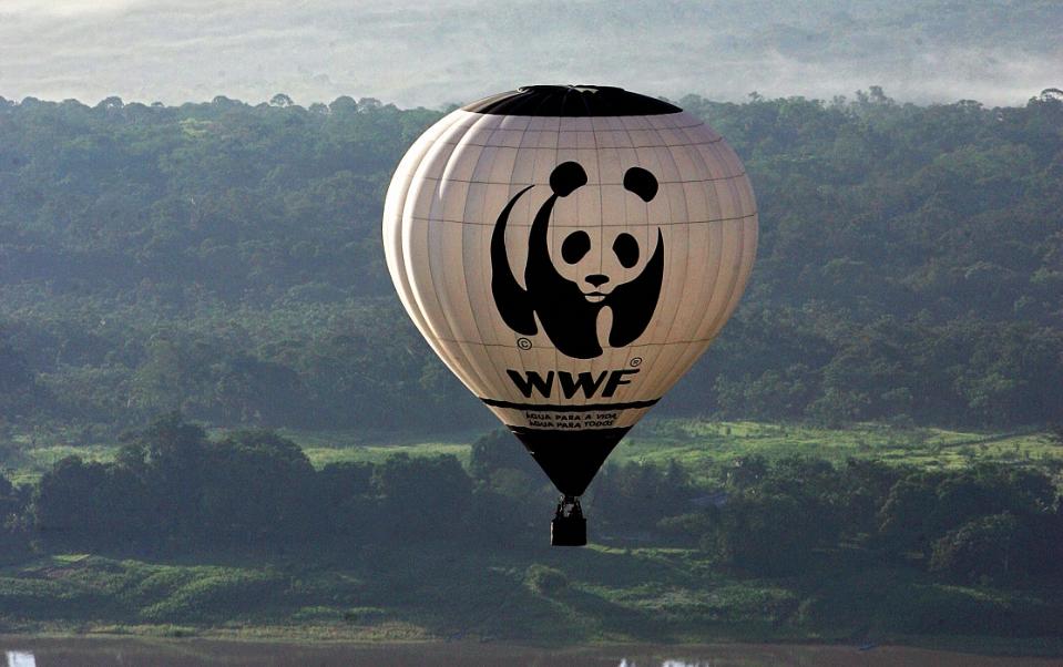 11 сентября 1961 года - День рождения Всемирного фонда дикой природы (WWF)