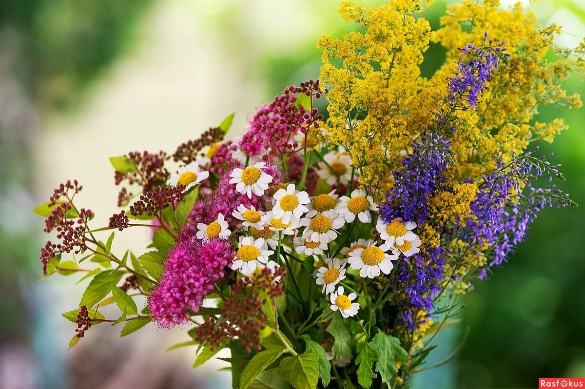 осталось охапка полевых цветов картинки красивые зато летом