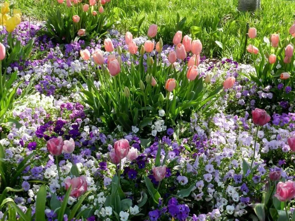 первую весенние цветы в саду названия и фото некоторая вьетнамская