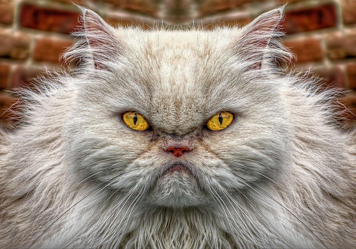 Ужасные коты фото