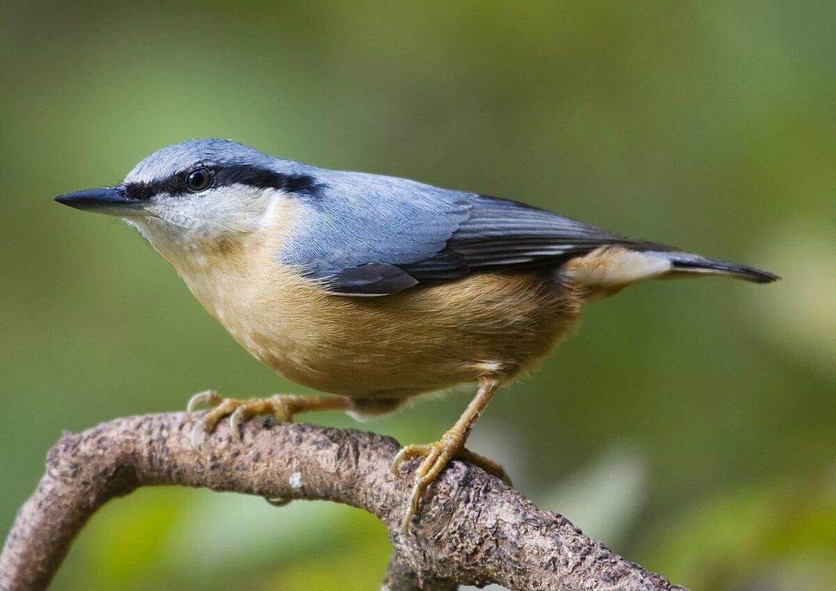 дикие птицы маленьких размеров перекручивается горизонтальной плоскости