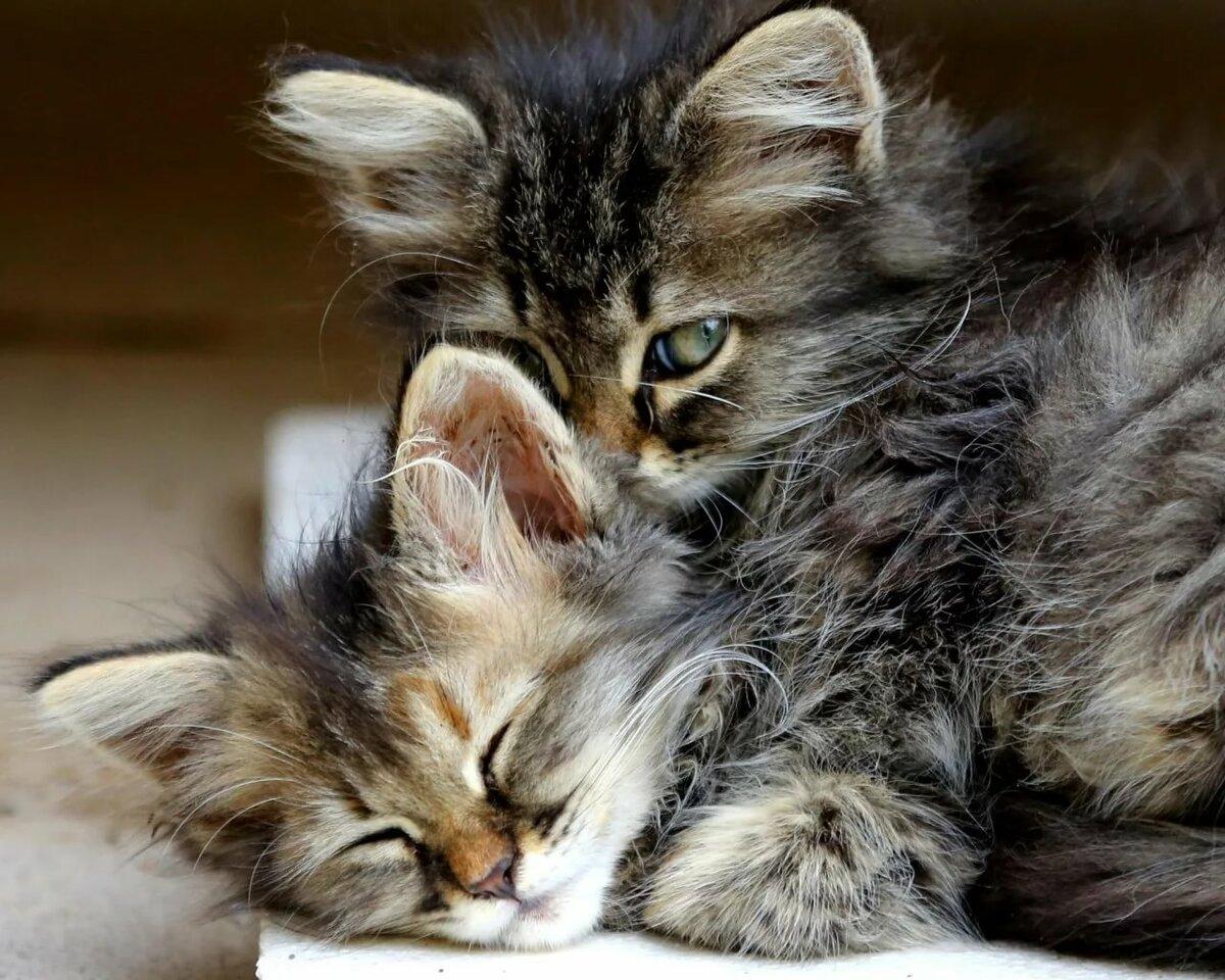 Картинки красивые котята обнимают друг друга
