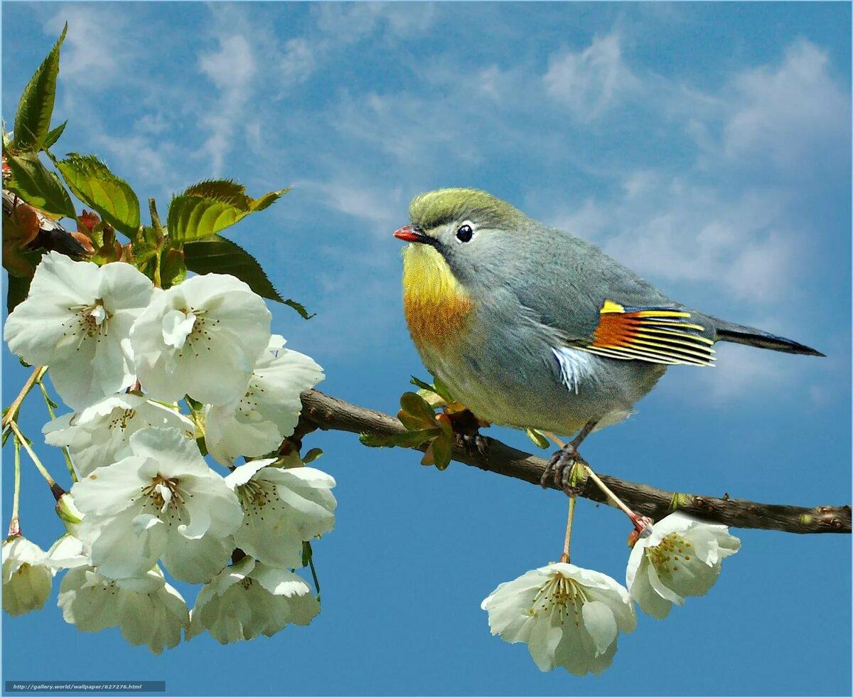 Картинки на тему весна смотреть