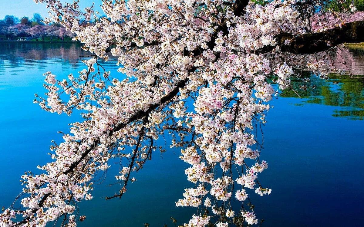Самые красивые картинки с весной на телефон