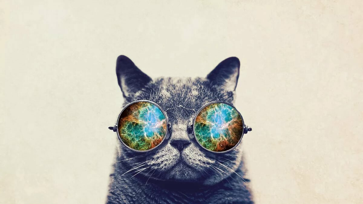 Обои на телефон кошка в очках