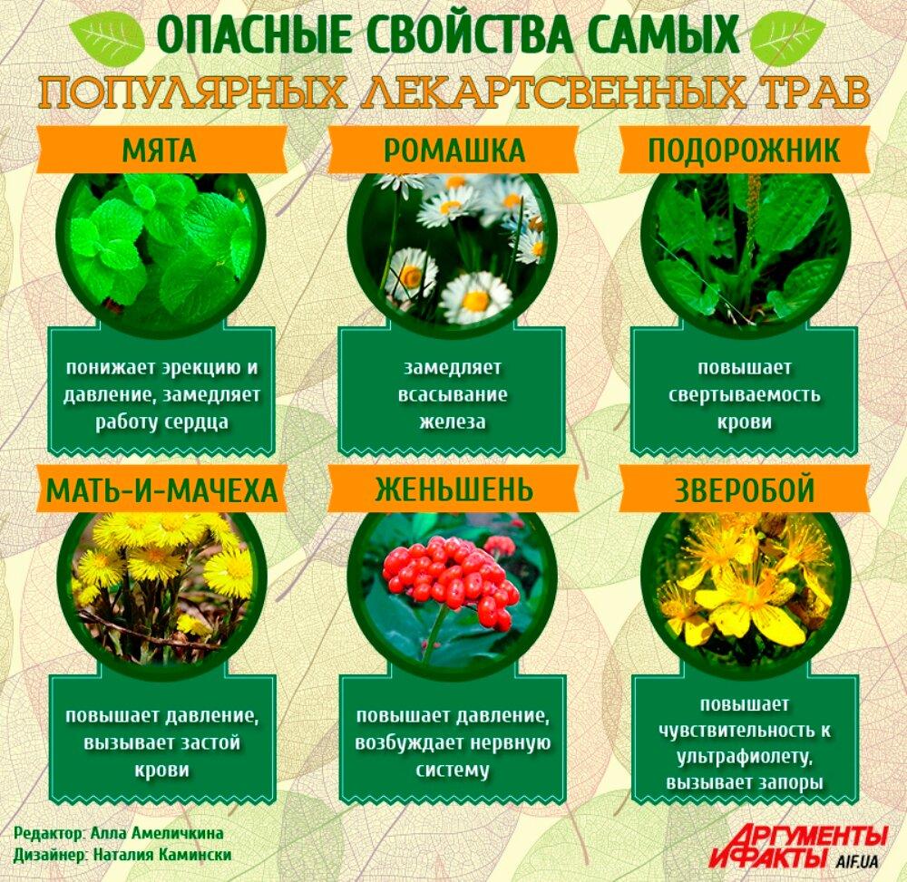 жил целебные травы россии и их свойства отличить петушка