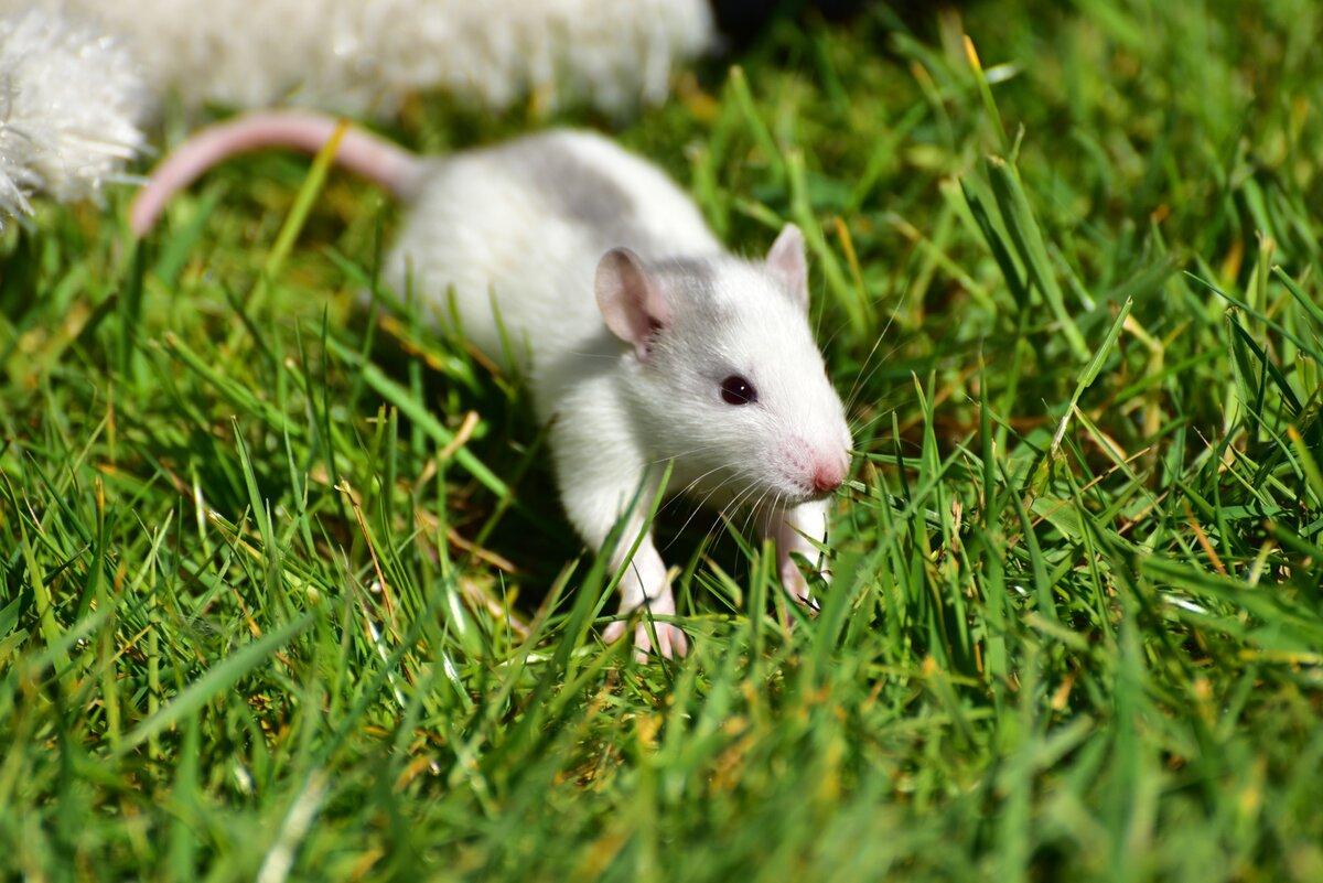 выбору интерьера фотографии зеленых мышей как изюминка медвежьего