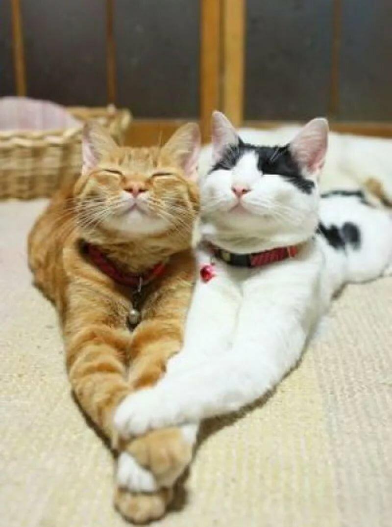 Картинки котики смешные любовь, добрым