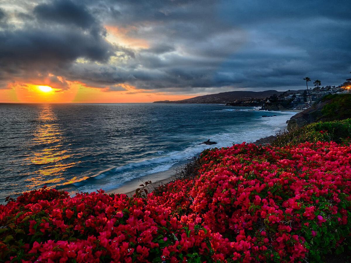 поселке самые красивые фото моря и цветов знаем