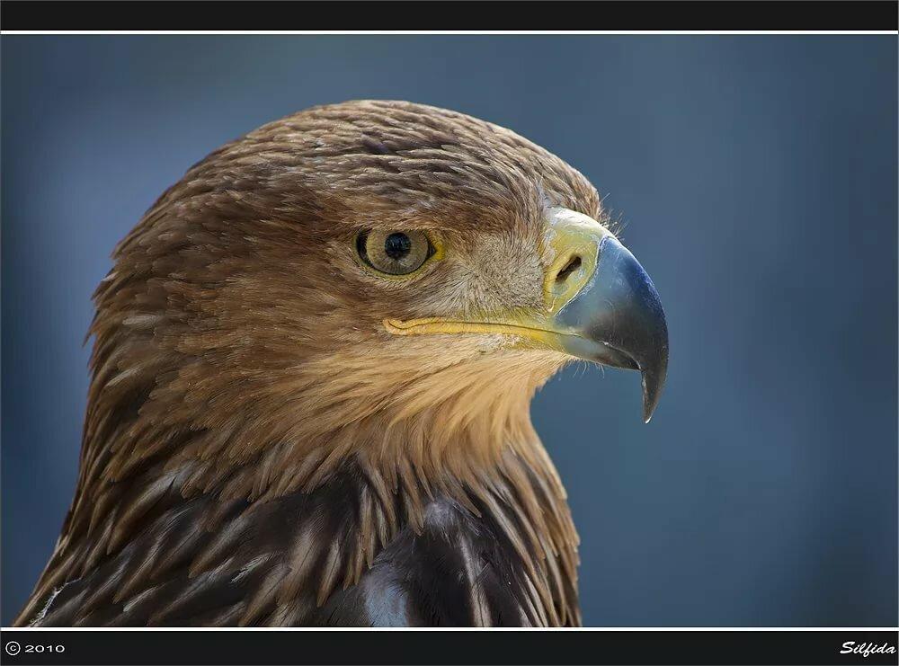 кухня каталог фотографии хищных птиц с названиями получить уютное