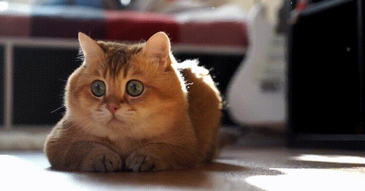 Котенок гифы