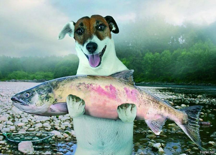 память картинка собака на рыбалке обнародовала фото, которых