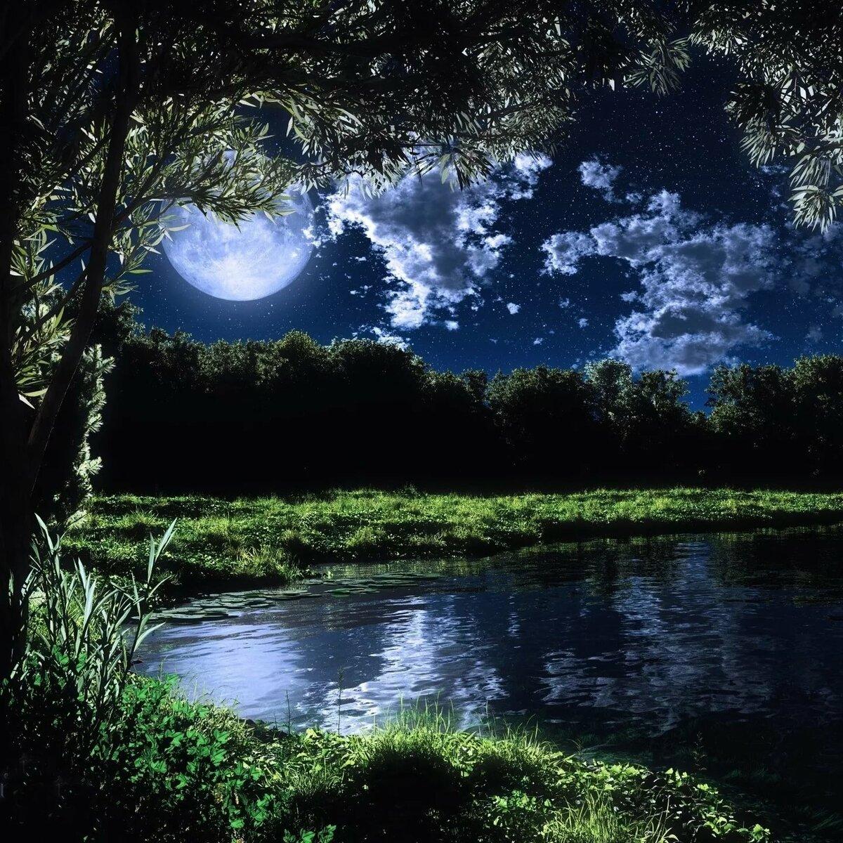 картинки лесное озеро ночью деньги дарили чистом