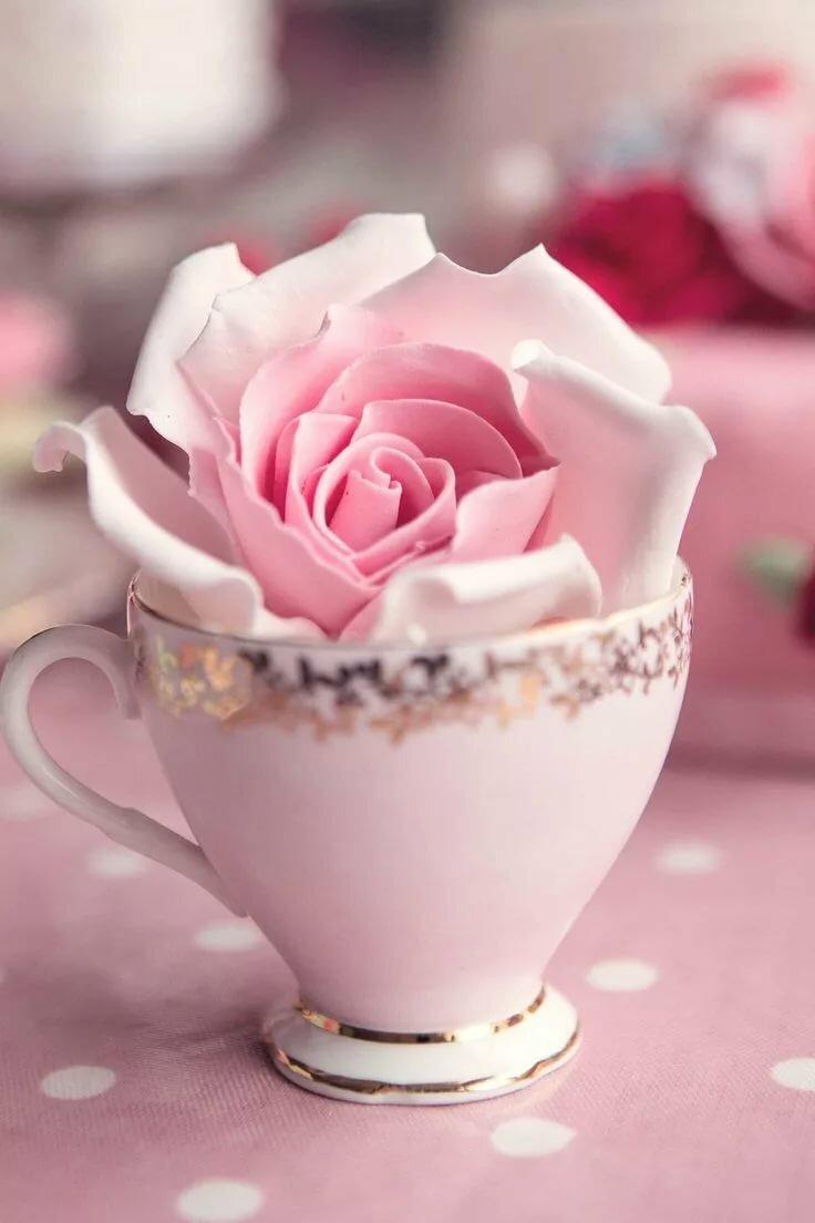 доброе утро картинки розовые розы фото ниже