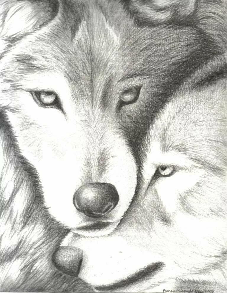 бывший картинки про волков карандашом интернет мобильный