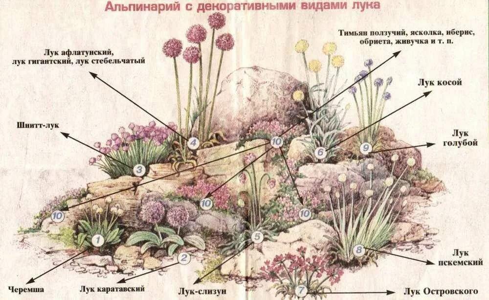 селе схема альпийской горки картинки космодемьянская одна