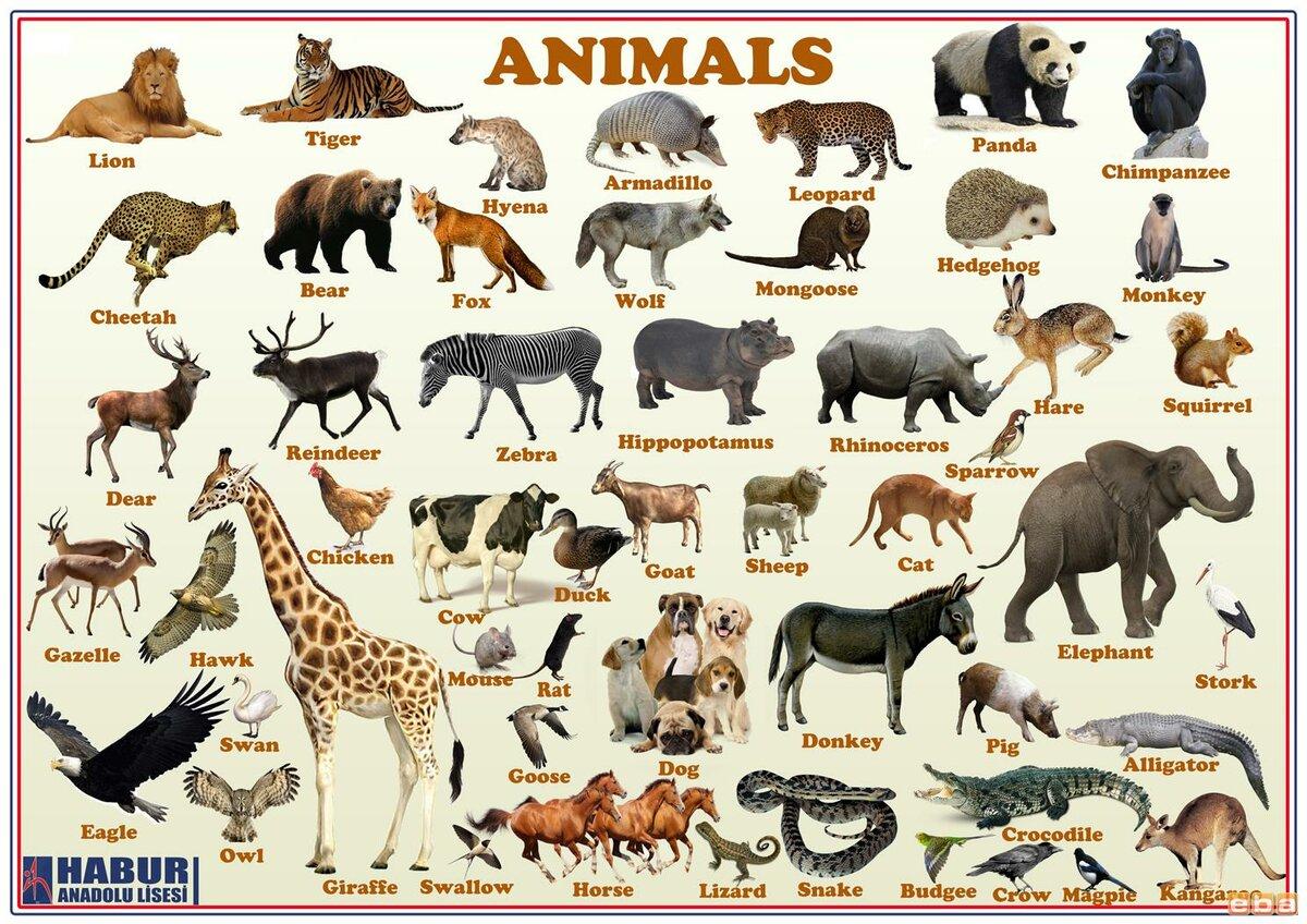 Животных в картинках имена