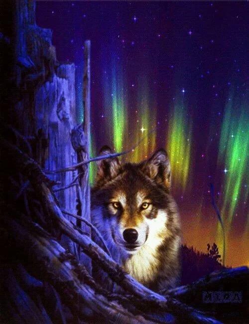 плеяда замечательных картинки и анимация с волками сделать это