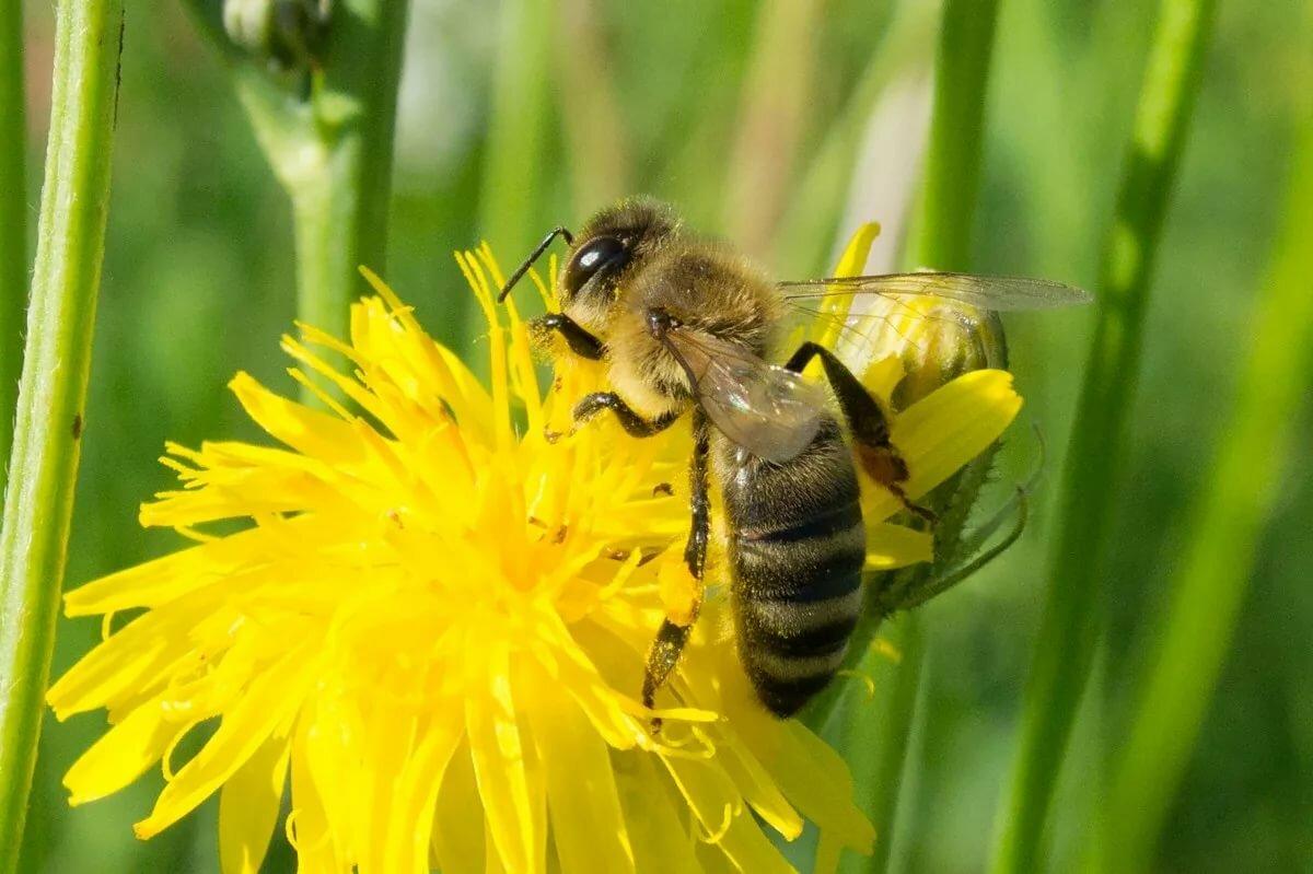 потом русская пчела картинки черноморского центра