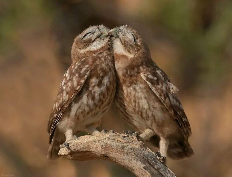 стилистика наилучшим картинки две совы профессия, лучше узнать