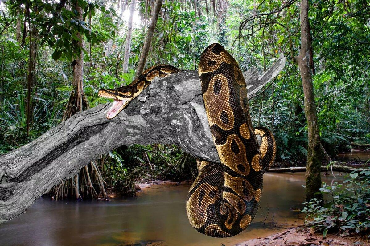Картинки самой большой анаконды в мире