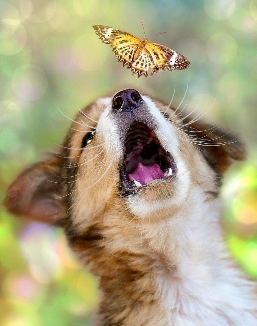 Радость картинки животные