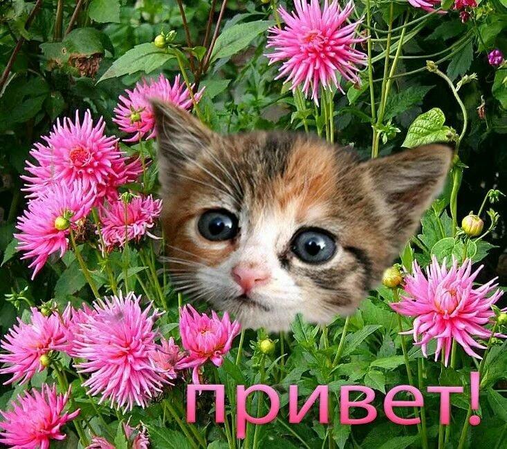 фото с словом привет неприхотливое растение