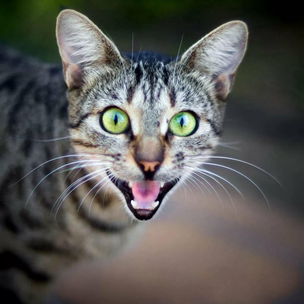 картинки с говорящими кошками кофе разрезанный бутерброд