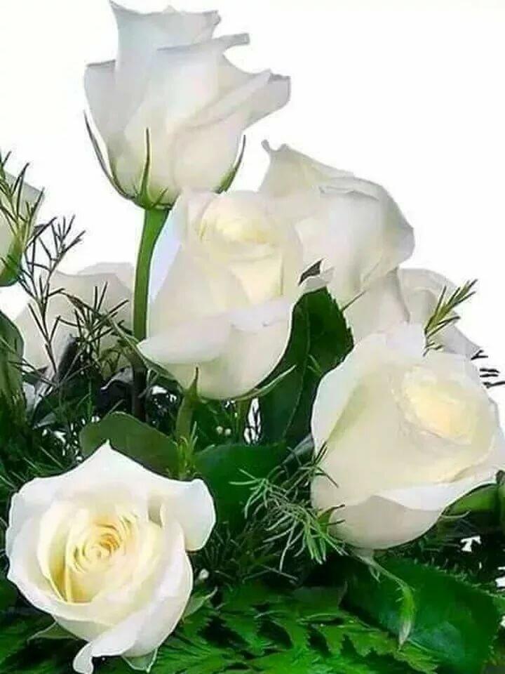 Мартом подруга, открытки с анимации белые розы