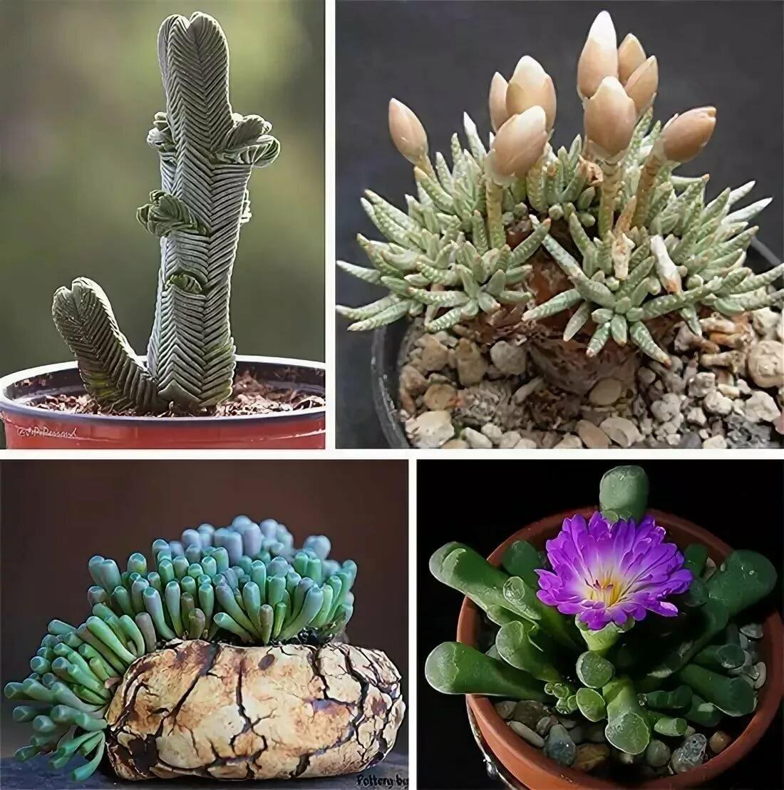 Популярные садовые цветы фото с названиями данное