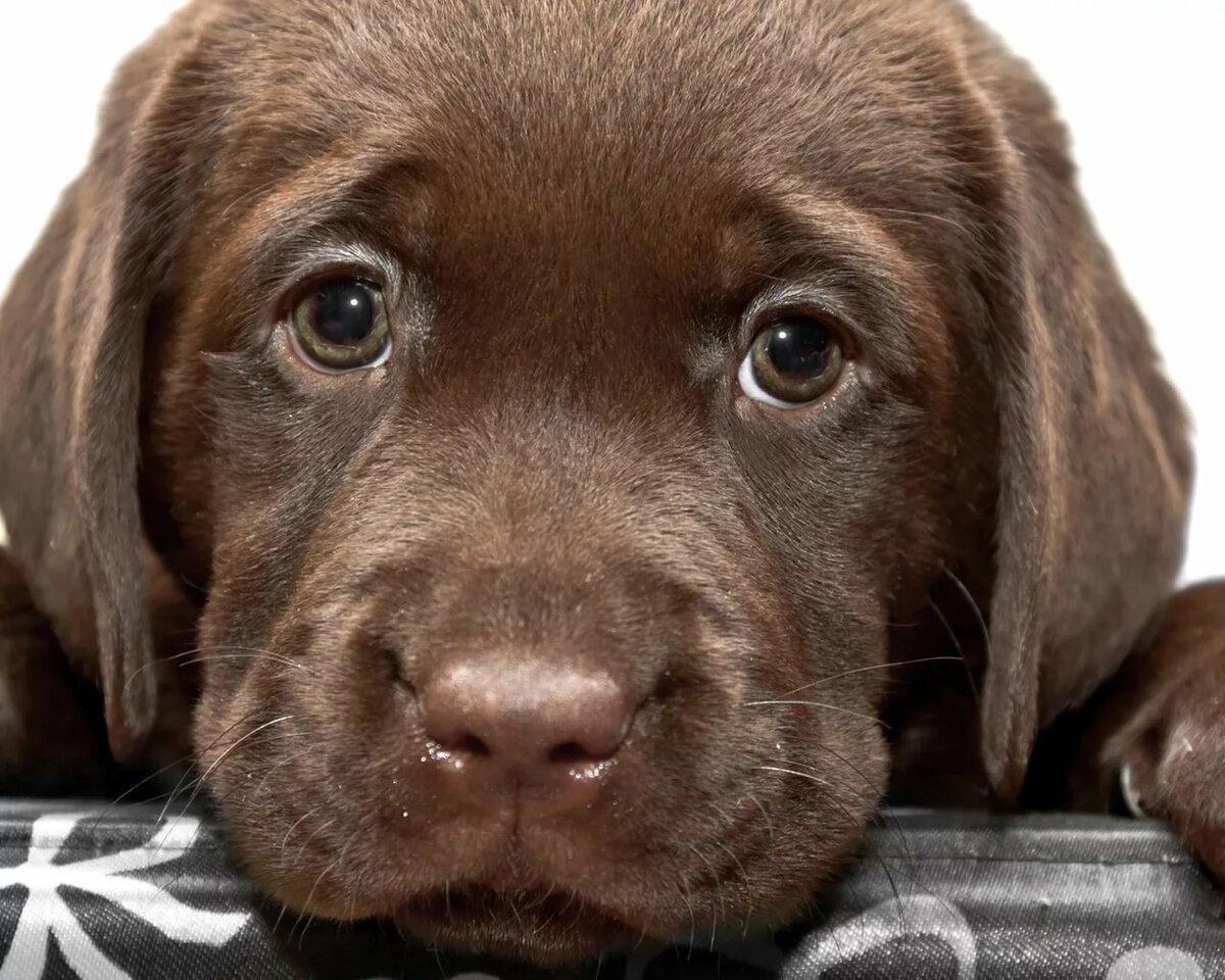 Собаки картинки смотреть онлайн
