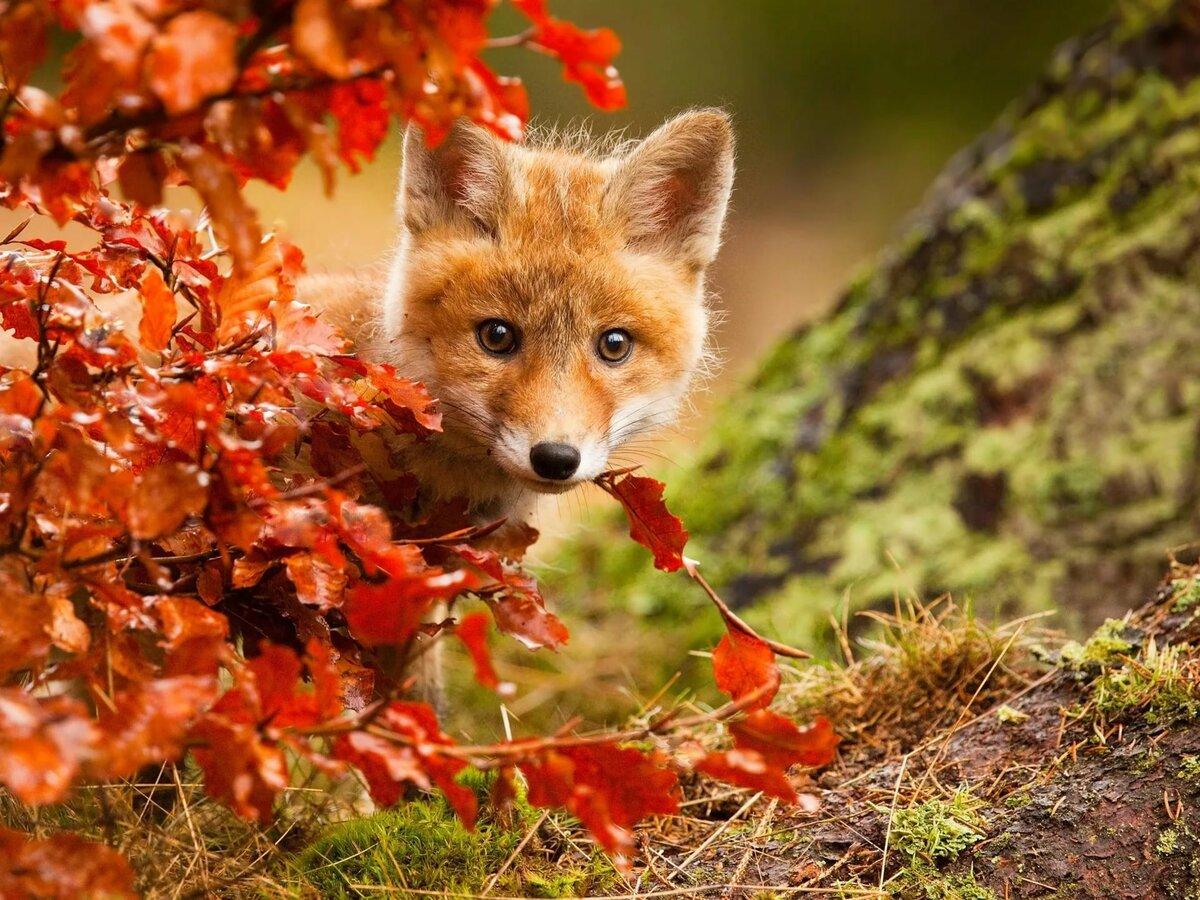 Животные фото красивые, открытки мальчику днем
