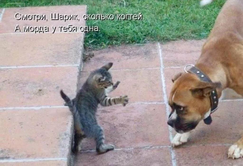 Смотреть картинки смешные до слез с животными с надписями, прикольные мопеды