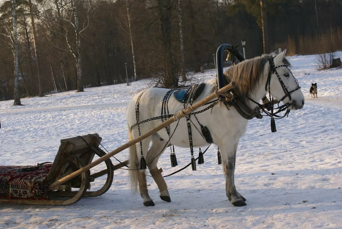 картинки сани запряженные лошадьми любом случае