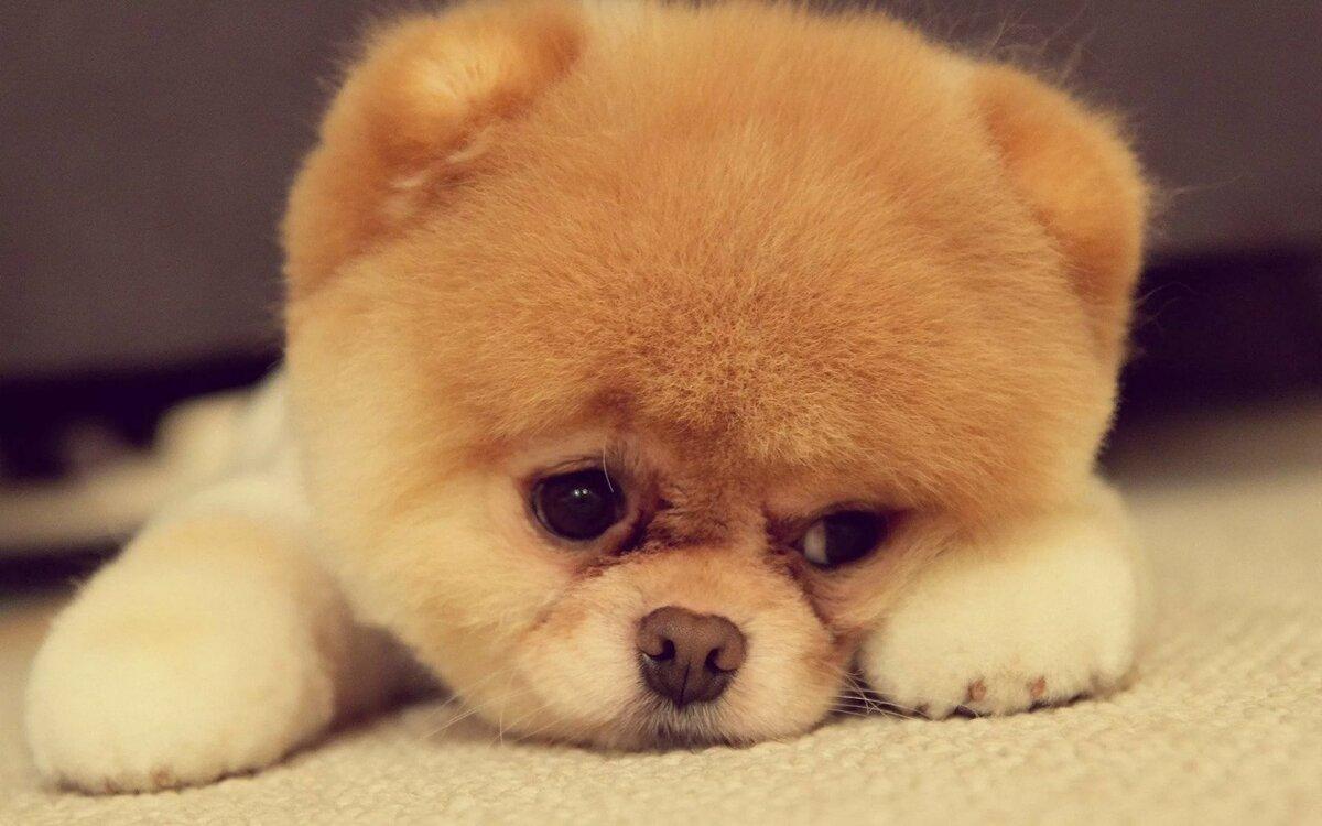 Собачки фото красивые маленький