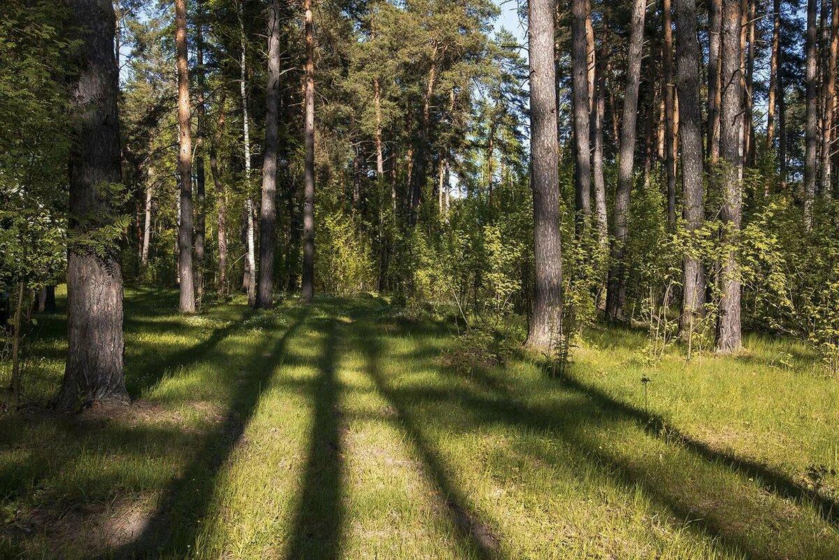 Картинки гуляй лесом