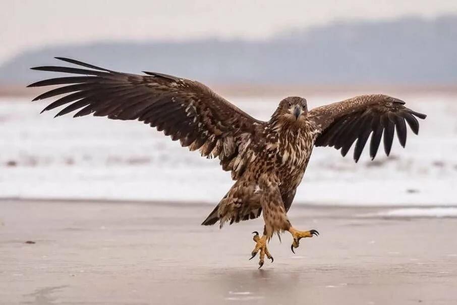 Орел картинки прикол