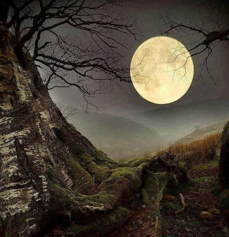 ночь в лесу в полнолуние картинки