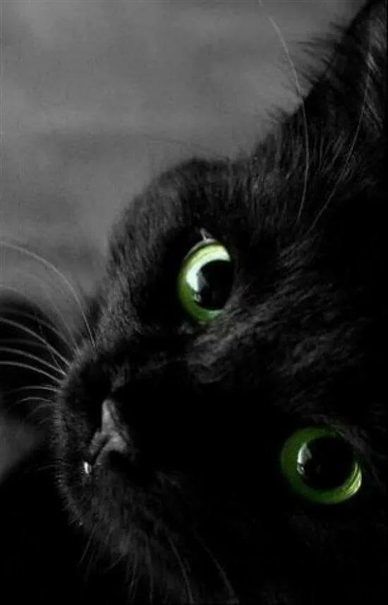 картинки черный кот с зелеными самому построить