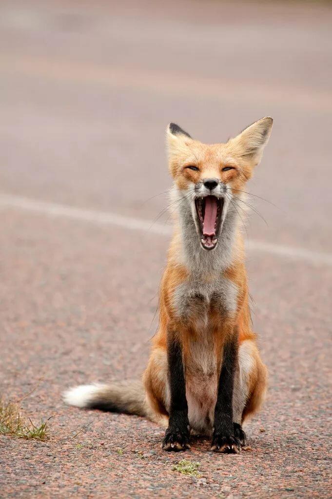 смотреть фото смешных лисичек раскраски мультфильма