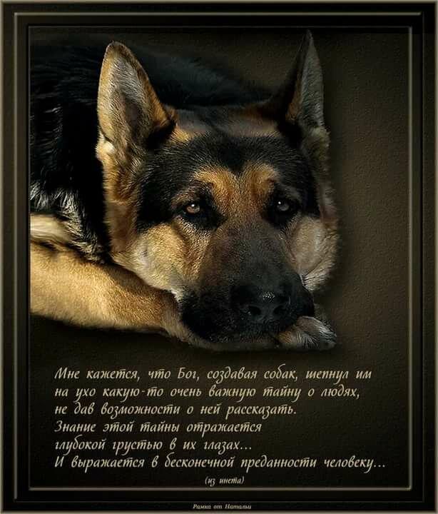 Картинки собак и цитаты
