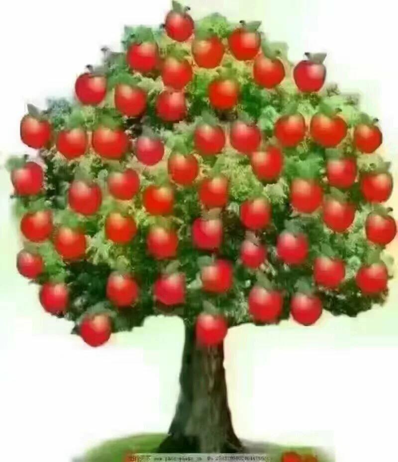 Картинки фруктовых деревьев с плодами для детей