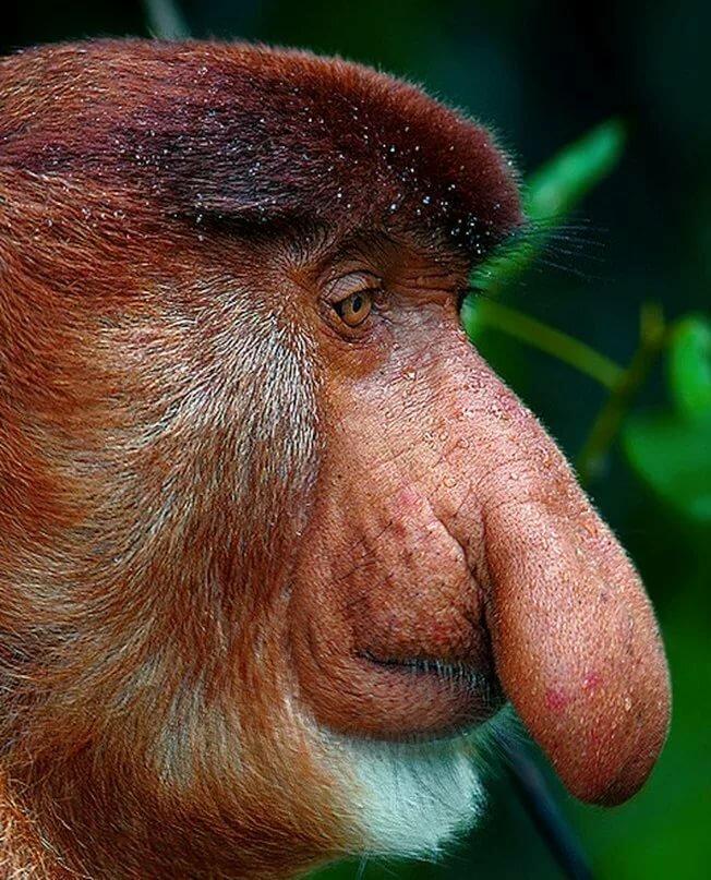 Для открыток, картинка смешного носа