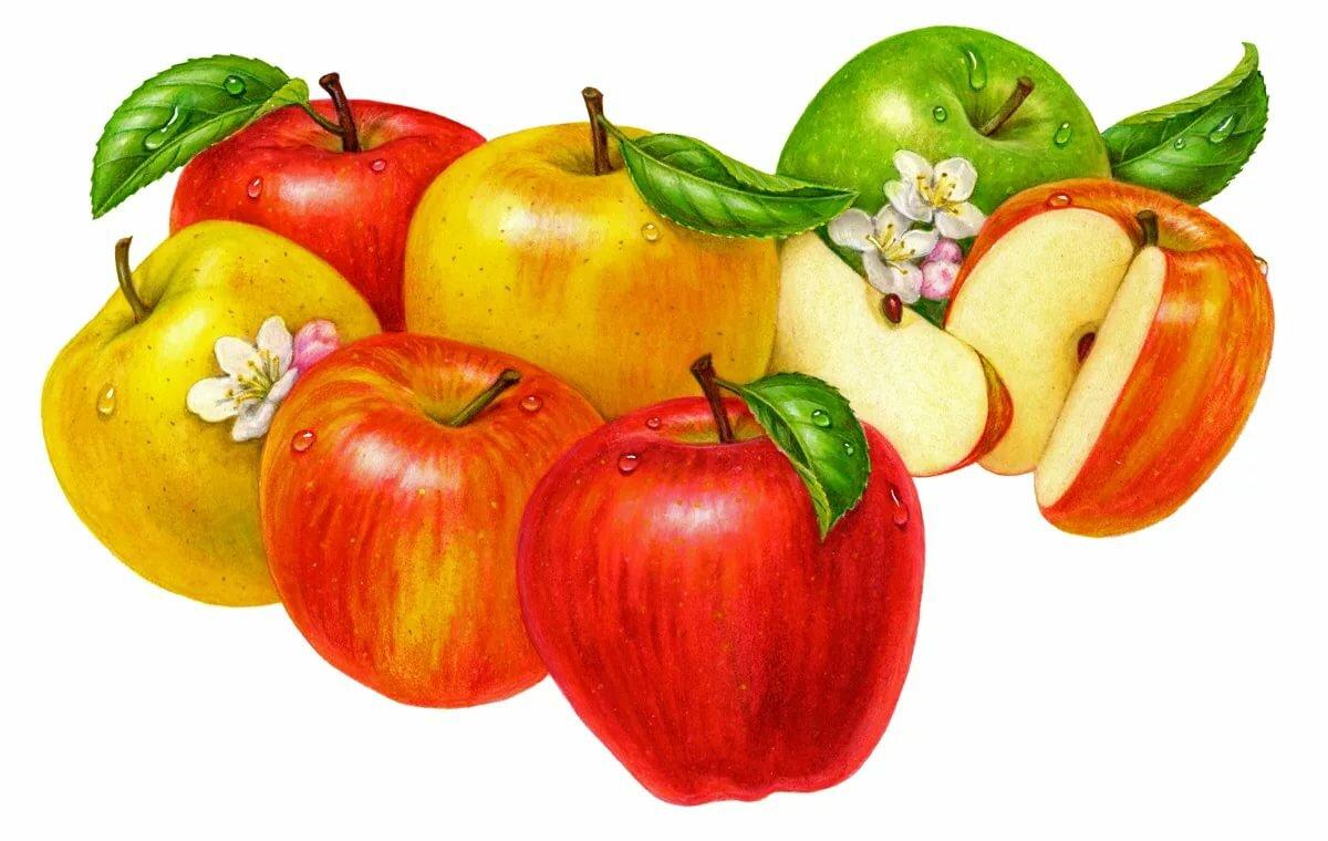 Картинки яблочки нарисованные