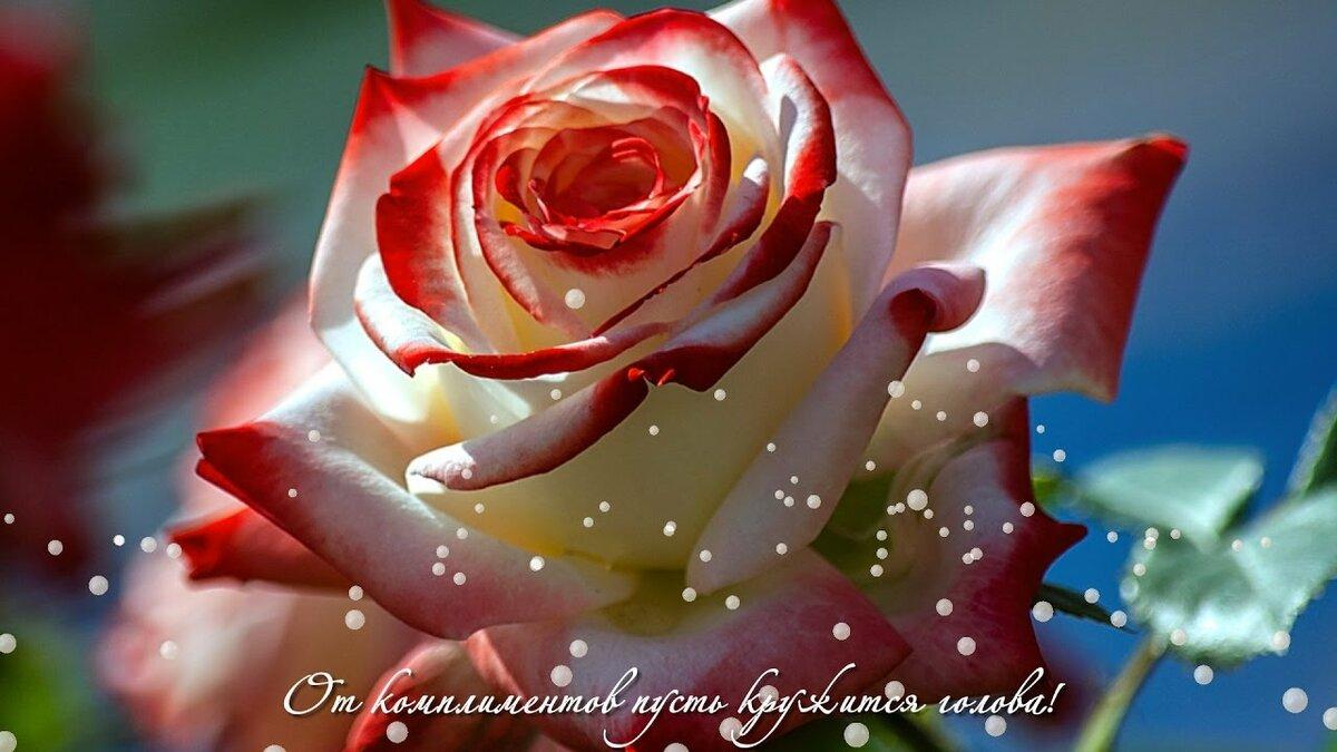 Картинками, открытки розы для самой красивой