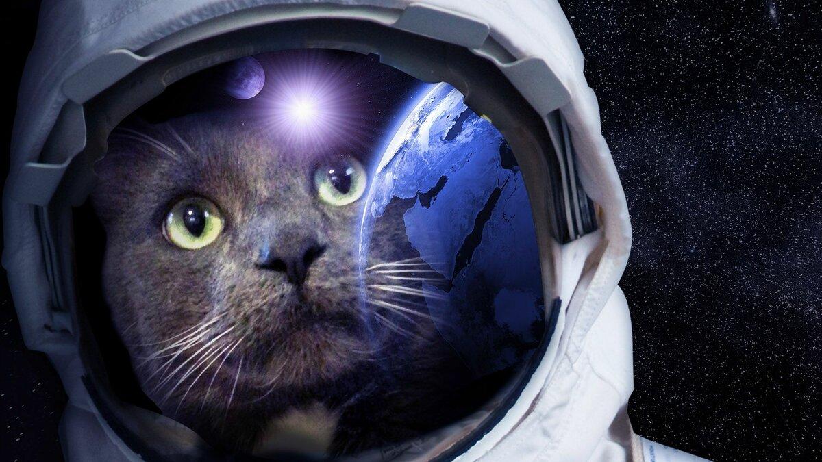 Смешной картинки, прикольные картинки из космоса