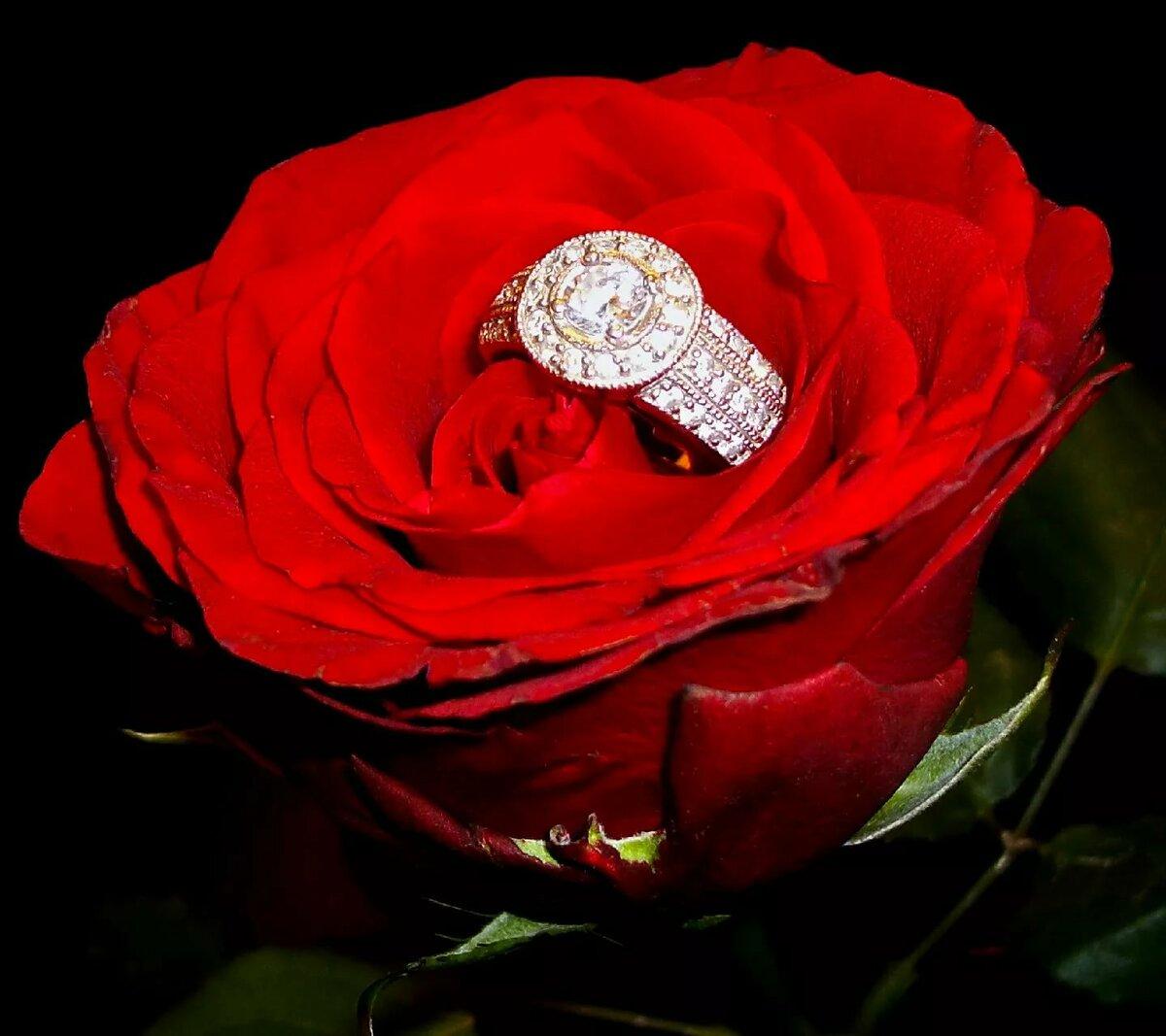 Днем, открытки с розами в бриллиантах