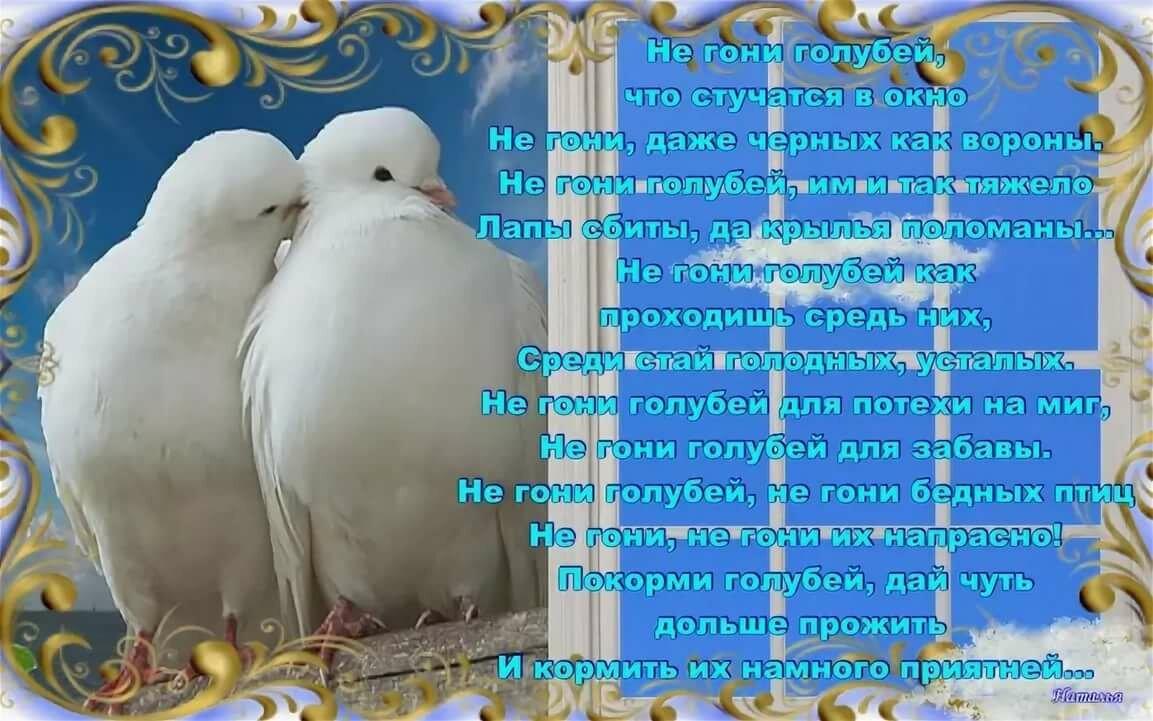 овощей с днем свадьбы поздравления про голубей для