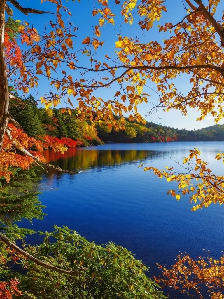 картинки на телефон красивые природа осень заядлых болельщиков проводим