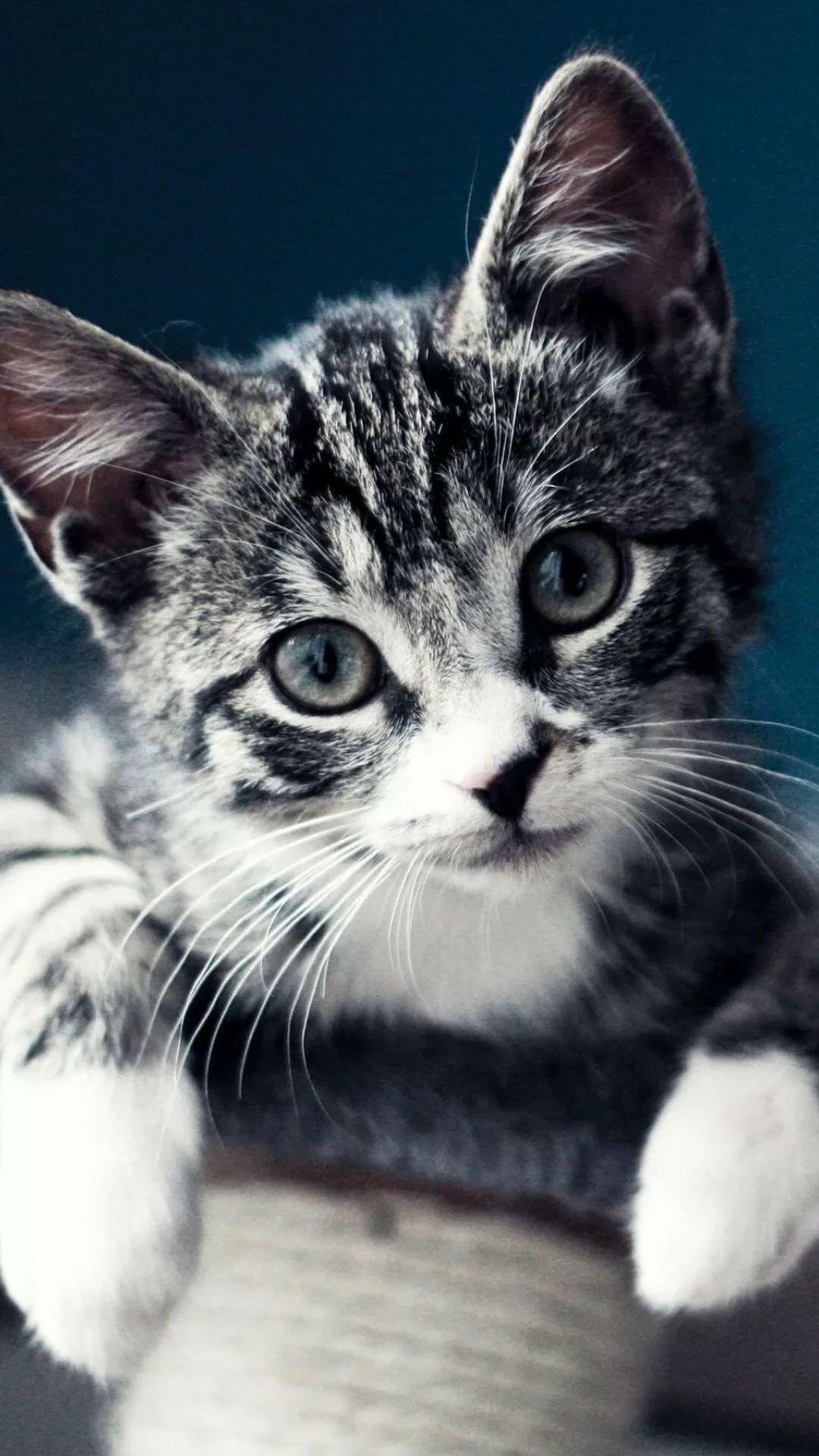 Смешные картинки с животными вконтакте